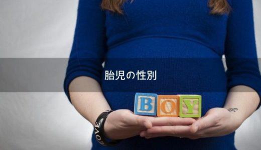 胎児エコーで性別がわかるのはいつ頃?男の子と判明した時の超音波画像も紹介